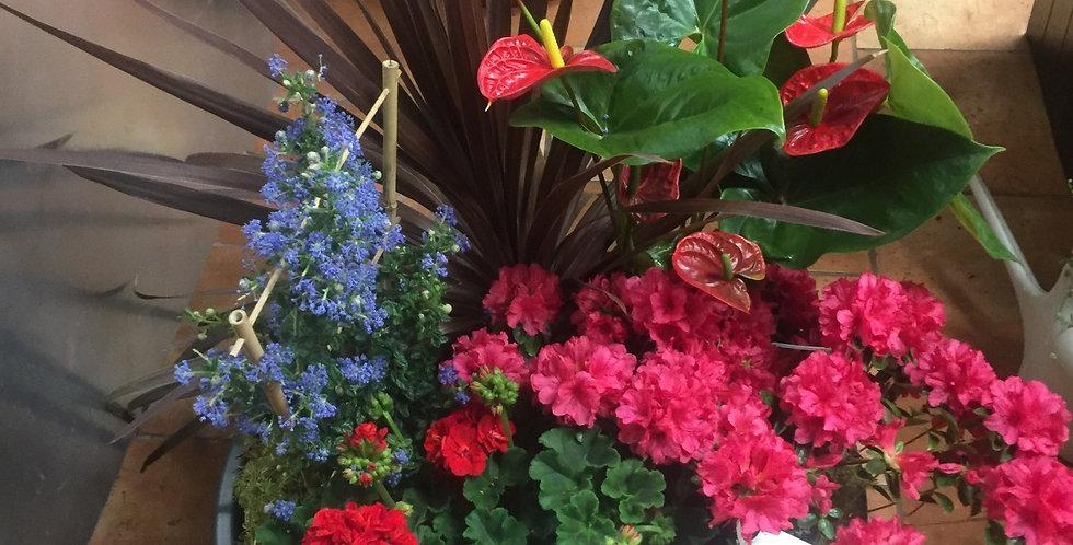 COUPE DE PLANTES POUR INHUMATIONS