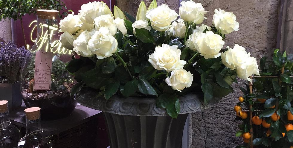 Rose Equateur blanche variété mondial ou avalanche
