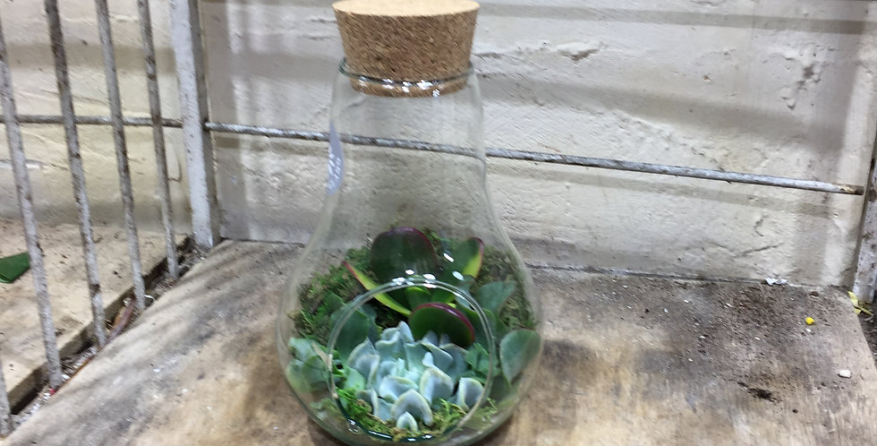 terrarium petit