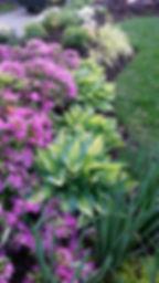 Spring perennials.jpg
