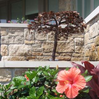 Copper Japanese Maple fountain