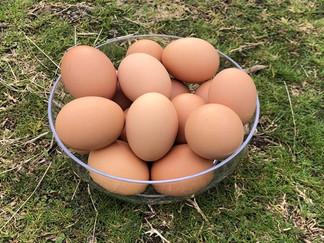 Pasture Raised Eggs Cobargo