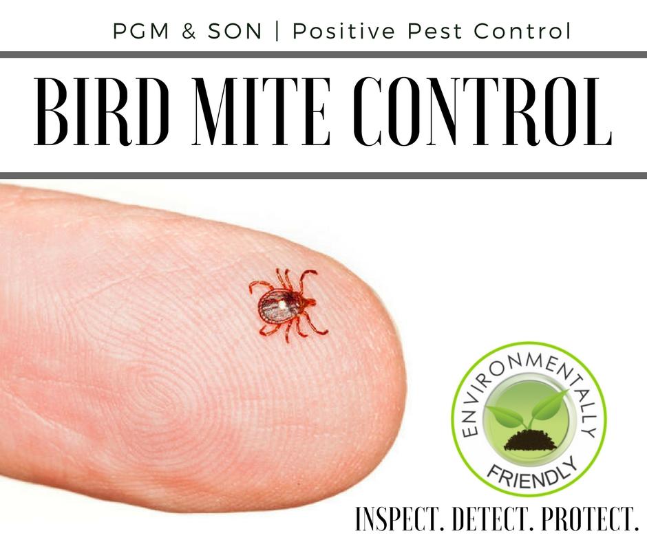 Bird Mite Control