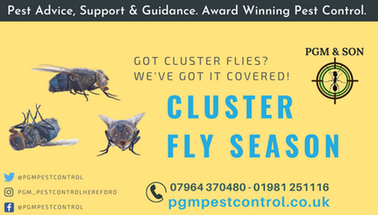 Got Cluster Flies_ We've got it covered!