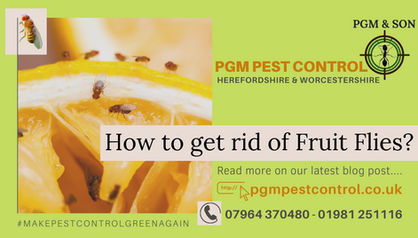 How to get rid of fruit flies_ are you h