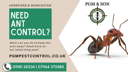 NEED ANT CONTROL IN HEREFORD_ NEED ANTS