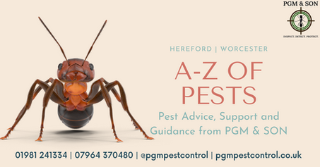 A-Z of pests guide, pest advice, support