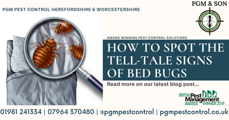 HOW TO SPOT THE TELL TALE SIGNS OF BED B