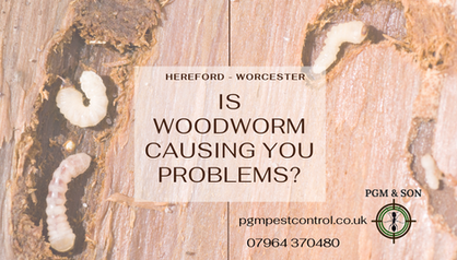 Is woodworm causing you problems_ herefo