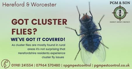 got cluster flies_ we've got it covered
