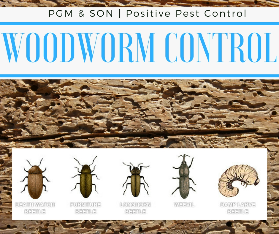 Woodworm Control