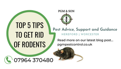 top 5 tips to get rid of rodents rats mi