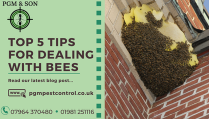 TOP 5 TIPS FOR DEALING WITH BEES PGM PES