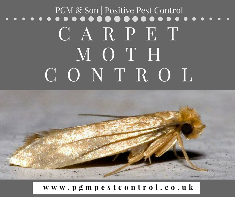 Carpet Moth Control