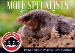 Mole Control Specalists