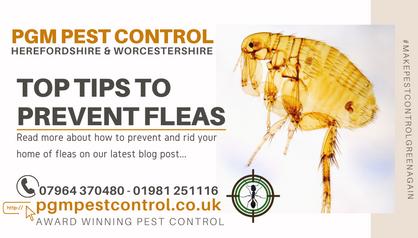 top tips to prevent fleas pgm pest contr