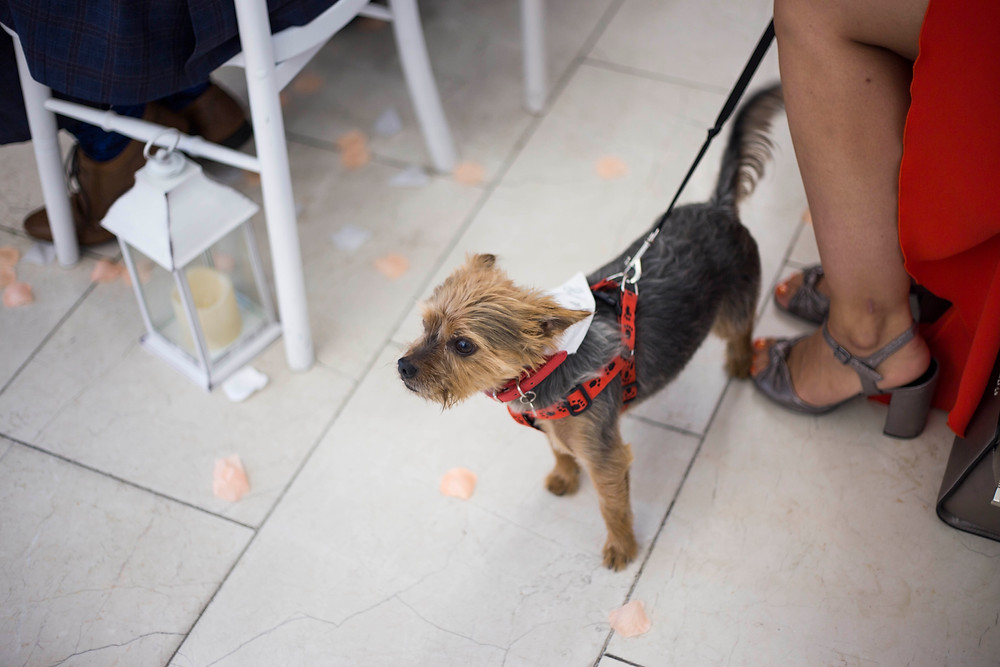Dog of honour Liver building wedding