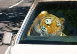 The Cadillac Tiger