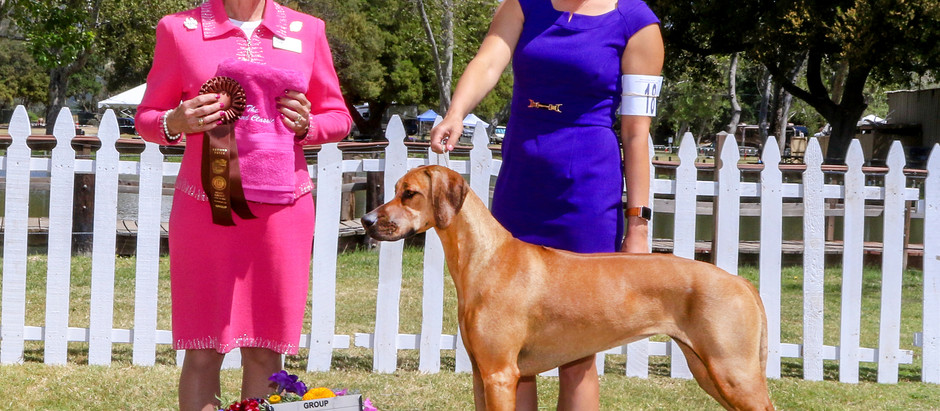 Willow turns heads at the OCRRC Specialty!