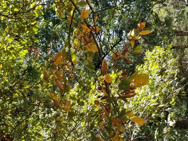 Fall leaves at Long Walk Spring Farm