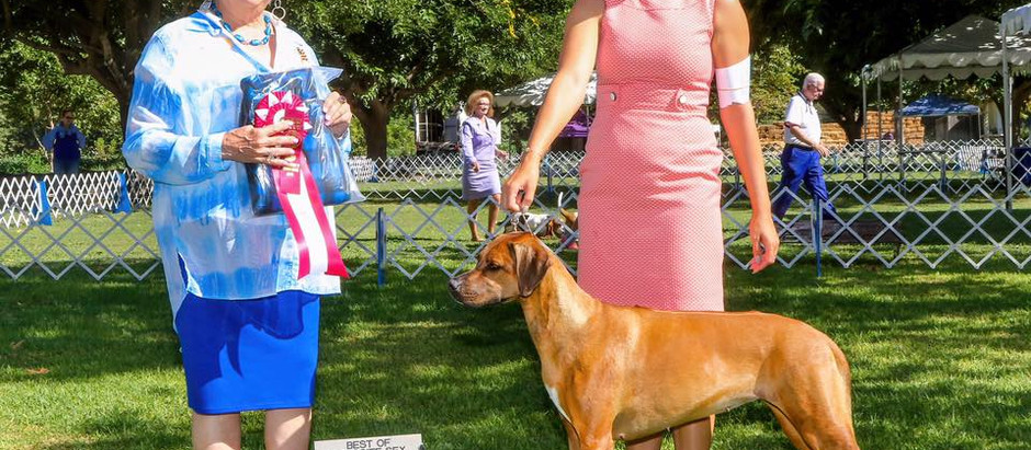 The girls have a successful weekend at Cabrillo Kennel Club!
