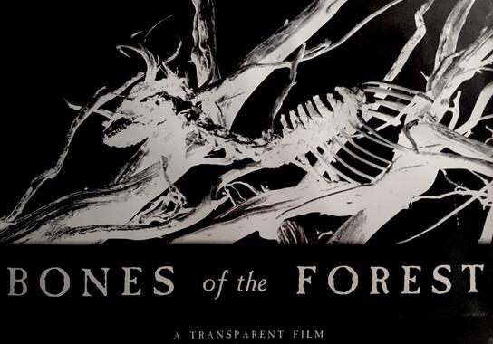 Bones of the Forest.JPG
