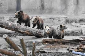 The Four Bears – Which are you?