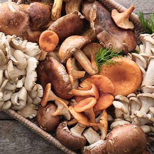 British Wild & Exotic Mushrooms