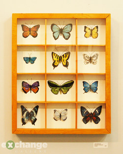 Chris Stametz -- Butterfly Collection