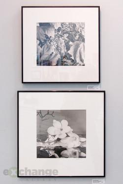 Carol Busada silver prints