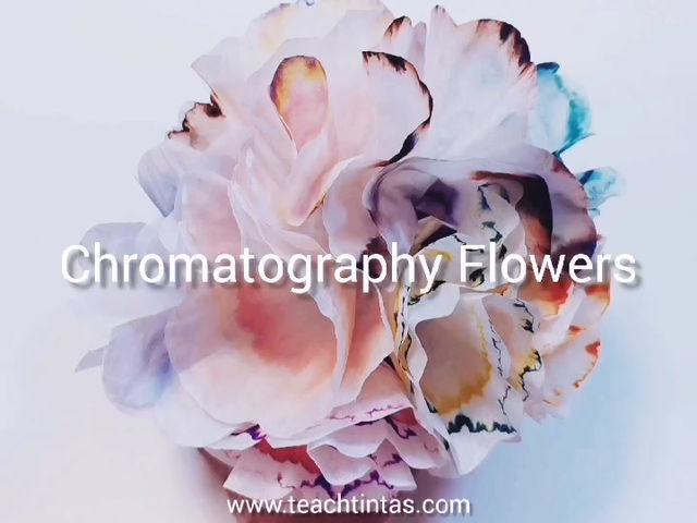 A celebration of colour: Chromatography Flowers!