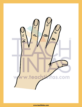 Parts of the Body (color flashcards)