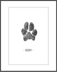 BUDDY (1).jpg