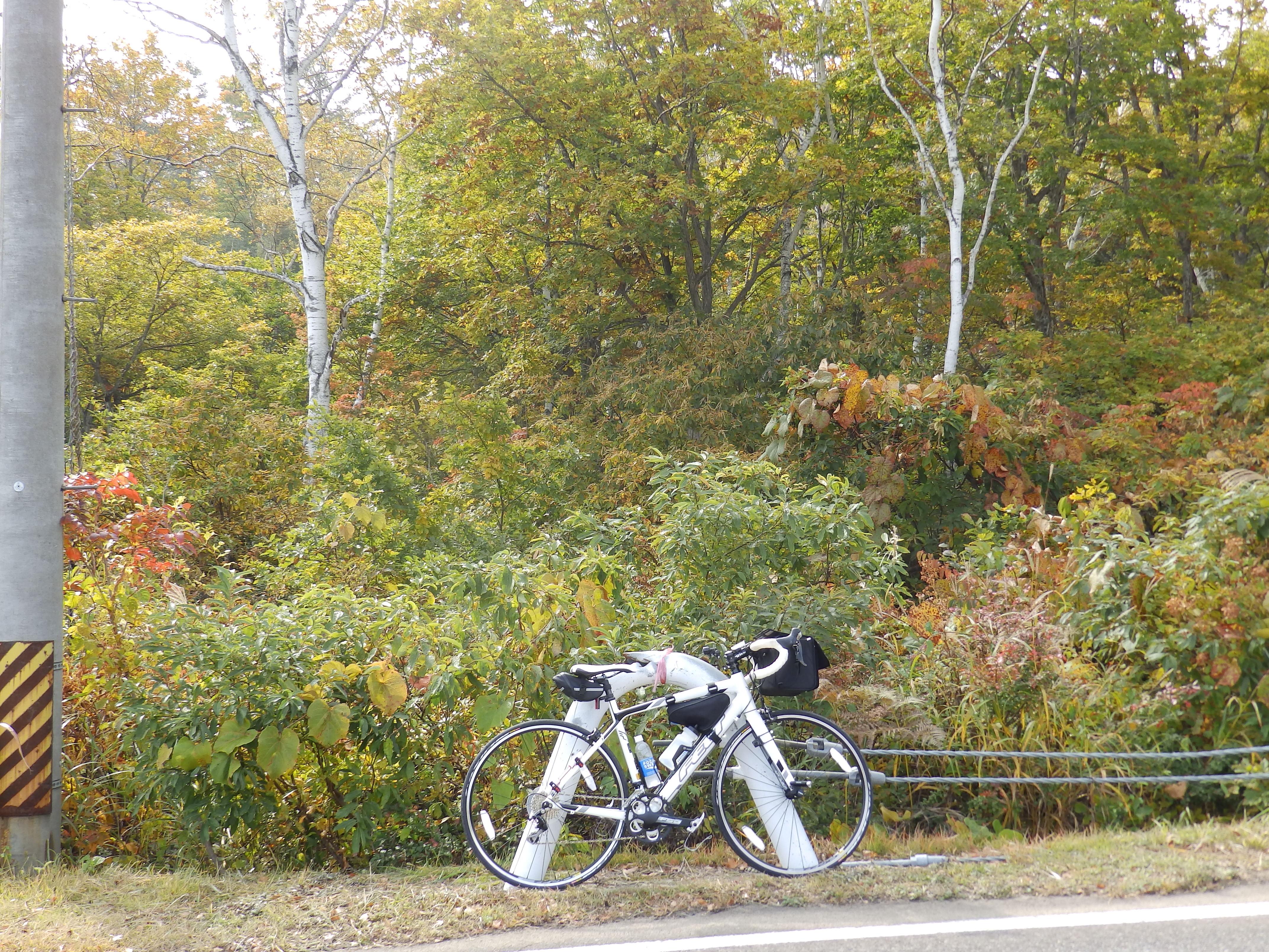 紅葉を始めている野尻湖周辺の木々です。