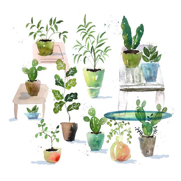 Table Plants.jpg