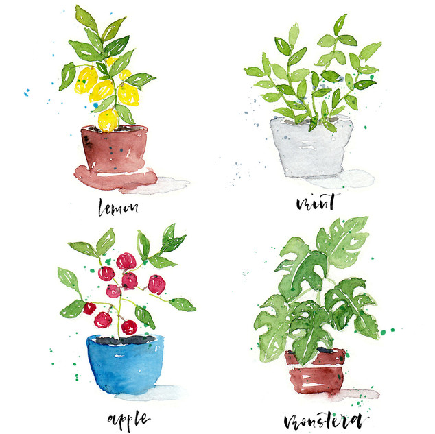 4 Potted Plants.jpg