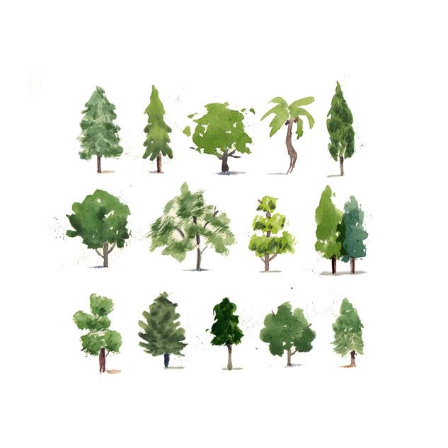 Mini Trees.jpg