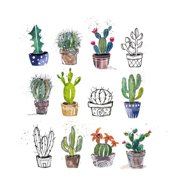 Mixed Style Cacti.jpg