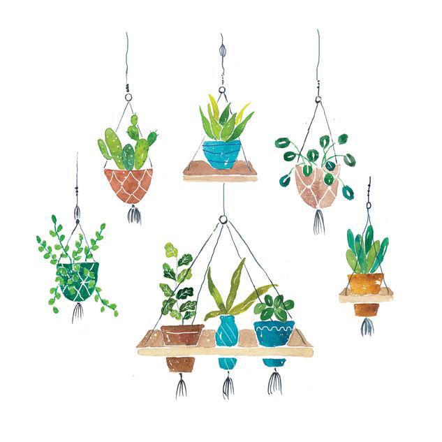 Macrame Hanging Plants.jpg