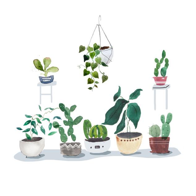 Grey Potted Plants.jpg