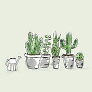 Watering Cacti.jpg