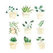 Plants - Buff Titan + Greens.jpg