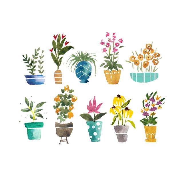 Spring Plants new.jpg