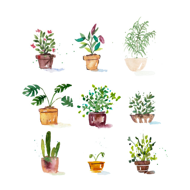 Vibrant Plants.jpg