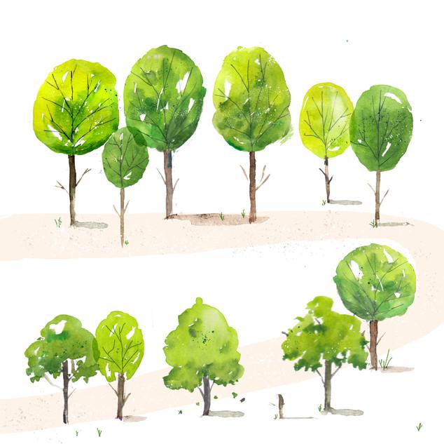 Tree Path 2.jpg