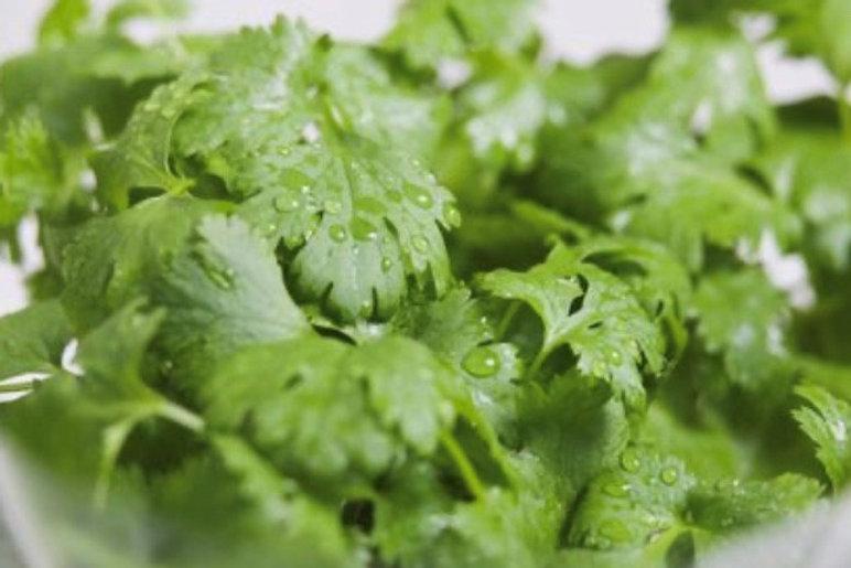 good cilantro.jpg