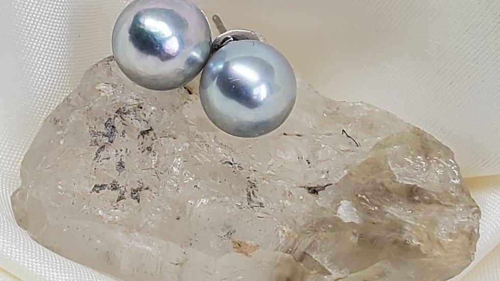 Stunning Bluish Gray Earrings
