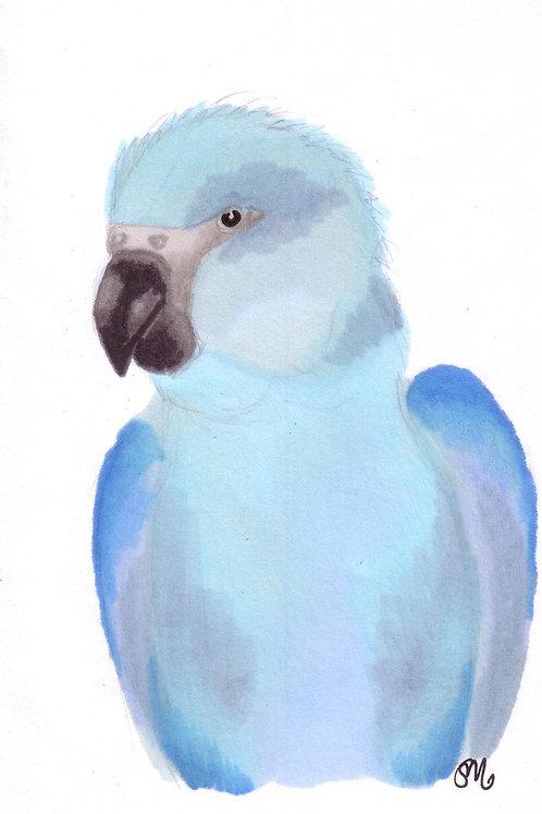 Spix Macaw A6 print
