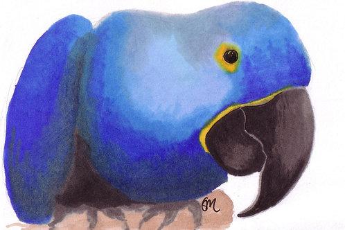 Hyacinth Macaw A6 print