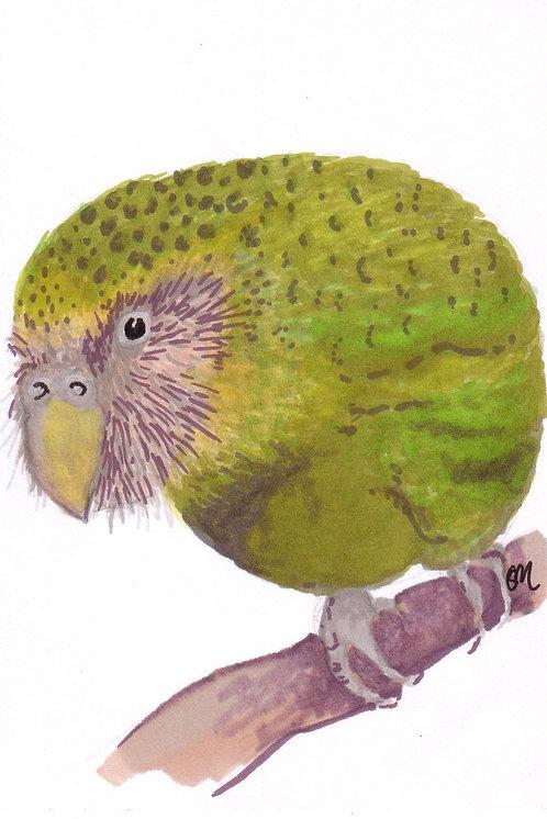 Kakapo A6 print